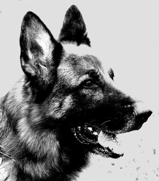 hund_660